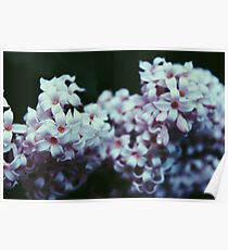 Pale Flowers Poster
