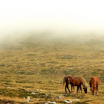 Horses in the mist by martinbenito
