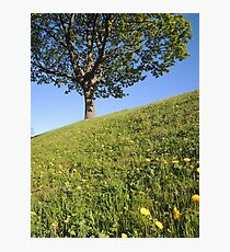 Happy Inclination Photographic Print