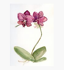 Watercolor orchid Photographic Print