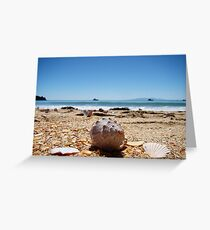 Waiheke Island Seashells Greeting Card