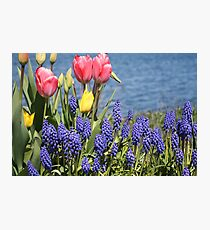 Pink Tulips by Ocean Photographic Print