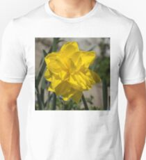Sunny Yellow Spring - a Golden Double Daffodil T-Shirt