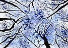 Trees by Elizabeth Kendall