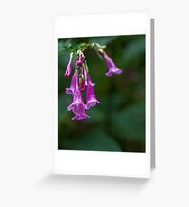 Delicate belles Greeting Card
