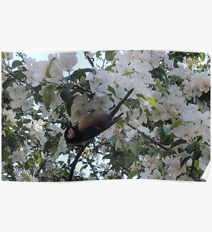 Nimble Musician (Bird in Blossom) Poster