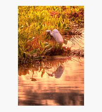 Dawn Mannington Meadows, It's Going to be a Great Day Photographic Print