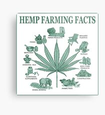 Hemp Farming  Metal Print
