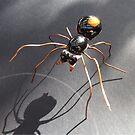 Red Back Spider by Alex Gardiner