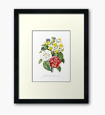 P.J. Redoute vintage colorful flowers botanical illustration.  pink and white camellia, yellow and white daffodils, blue and yellow pansies. Framed Print