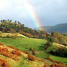 Mountain biker and rainbow by turniptowers
