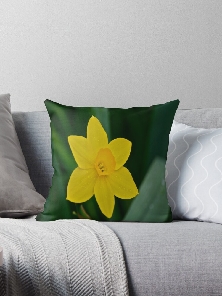 Daffodil  by Carolyn Clark