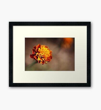 Marigold Golden Framed Print