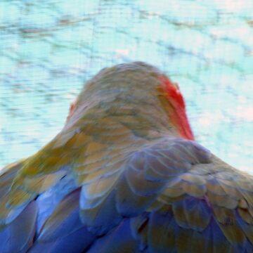 parrot (Mauritius) by FedericoFaggion