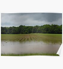 Flooded Field Poster