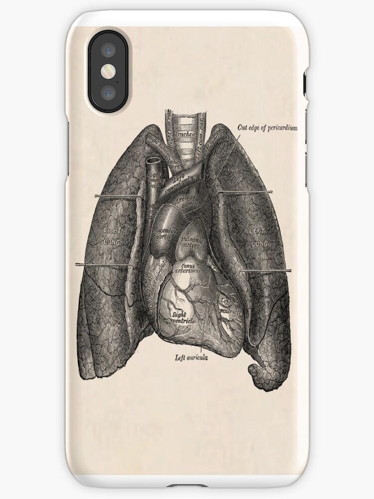 Vinilos y fundas para iPhone «dibujo anatómico de pulmones y corazón ...