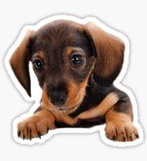 Cute puppy! Sale! Sticker