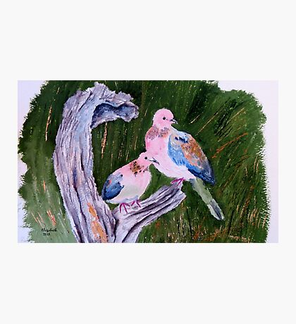 Two laughing doves  Photographic Print