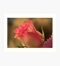 Soft Pink and White Rose, As Is Art Print