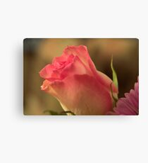 Soft Pink and White Rose, As Is Canvas Print