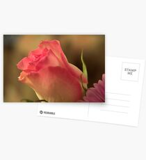 Soft Pink and White Rose, As Is Postcards