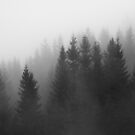 Foggy forest by Algot Kristoffer Peterson