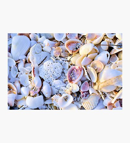 Seashells at Sunset Have Great Colors! Photographic Print
