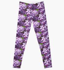 Lilacs Leggings