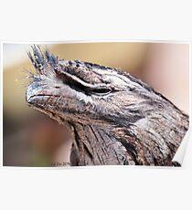 Tawny Frogmouth (Podargus strigoides) Poster