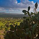 View of Messara Plain from the hill of Phaestus in Crete by Konstantinos Arvanitopoulos