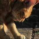 Ginger cat grooming on garden path by turniptowers