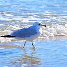 Wading In The Surf by Dawne Dunton
