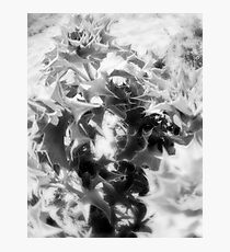 Sea Holly Photographic Print