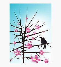 Thorns Photographic Print