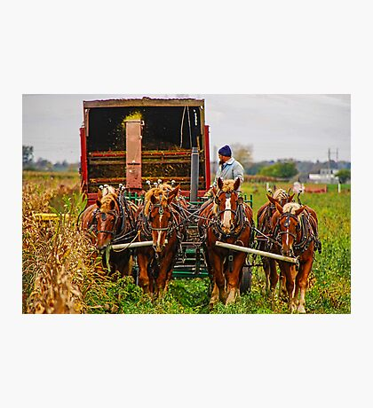 Cutting Silage 2 Photographic Print