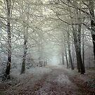 The forgotten road by davrberts