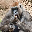 Gorilla by Saranet
