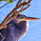 The Great Blue Heron by Dawne Dunton