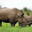 MOTHER & CALF - White Rhinoceros - Ceratotherium sumum -WIT RENOSTER von Magriet Meintjes