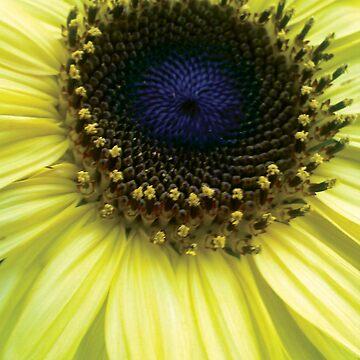 Sunflower by dharmadogstudio