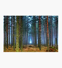 Pine Forest in Morning Fog. Photographic Print
