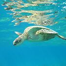Turtle, Hawaii by spanners79