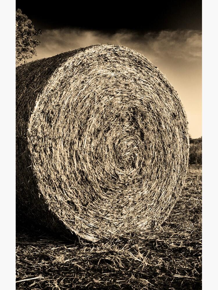 Round Hay von Motti