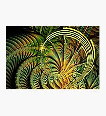 Fern Loop Photographic Print