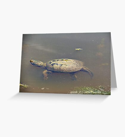 Old Mossy Back Snapping Turtle Greeting Card