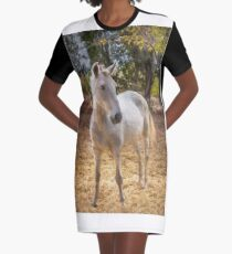 Young horse in the paddock Graphic T-Shirt Dress