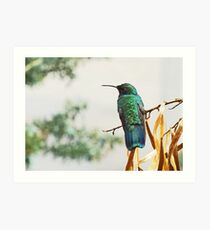 Himming bird Art Print