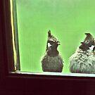 friends visit us by queenenigma