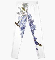 Vintage - Flower - Wisteria Leggings