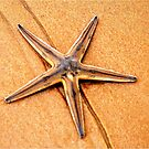 """PERFECT CREATION"" - starfish in mozmbique by Magriet Meintjes"